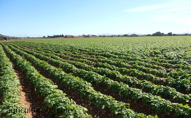 Patatas Manifestación de agricultores