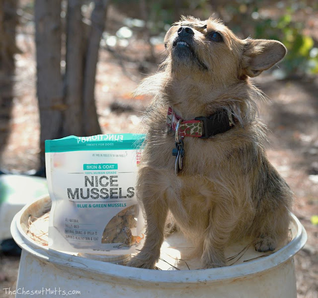 Mini Review & Giveaway: The Honest Kitchen Nice Mussels Dog Treat