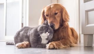 Senado aprova pena maior para maus-tratos contra cães ou gatos