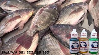 Essen Oplosan Untuk Ikan Nila