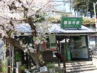 極楽寺駅の桜