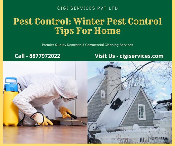 Pest Control: Pest Control Tips For Home (Winter Special)