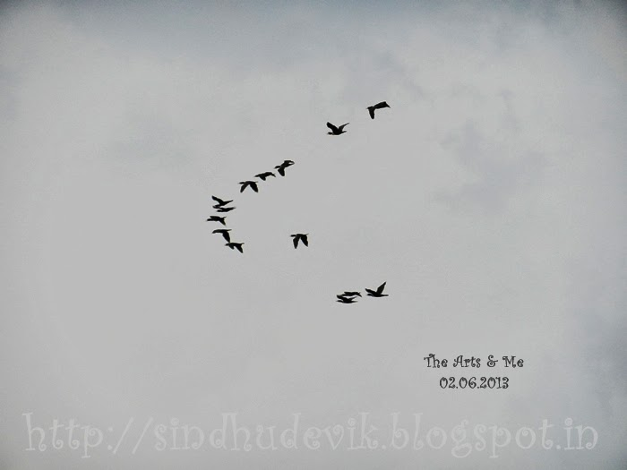 V Formation of Birds
