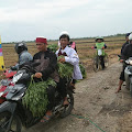BMH Panen Bersama Kangkung Khas Jali di Demak