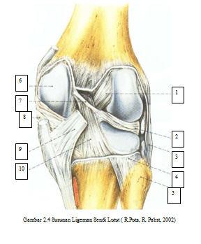 A femoropatellaris ízület osteoarthritis, Homeopátia artróziskezelés
