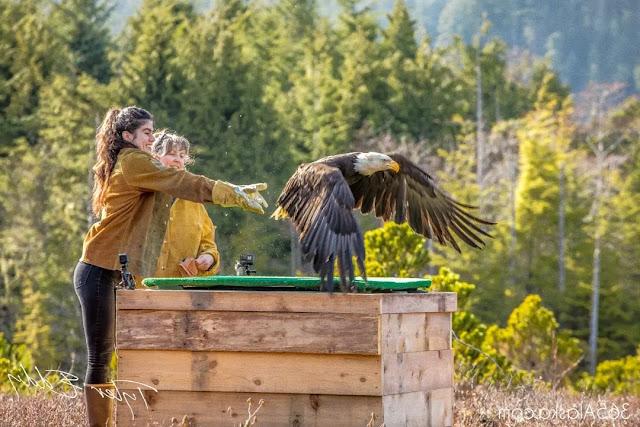 Raptor Rehabilitation Center in Sitka, Alaska