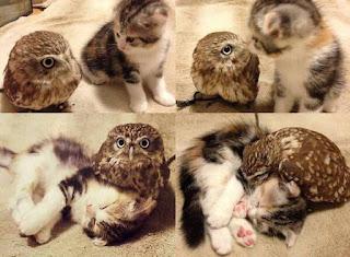 уютно вместе: кот и сова