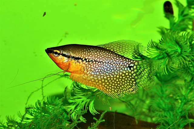17 Most  Popular Freshwater Fish In The World