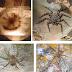 Biólogo de Uniguajira descubrió nueva especia de araña