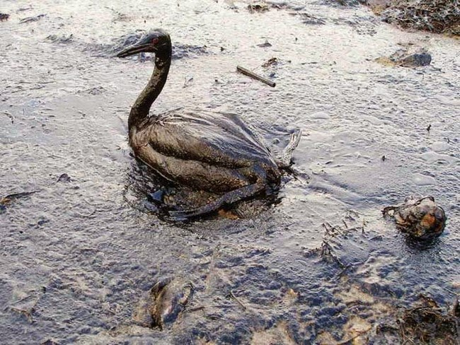 These 20 Photos Are Heartbreaking Evidence Of The Consequences Of Pollution