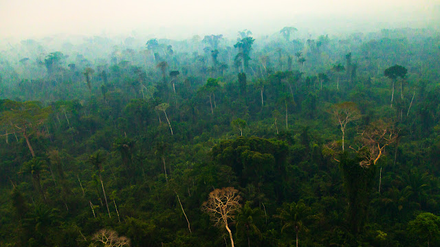 Human activities drying out the Amazon: NASA study