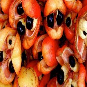 Apa buah Ackee dan ada manfaat nya tidak?