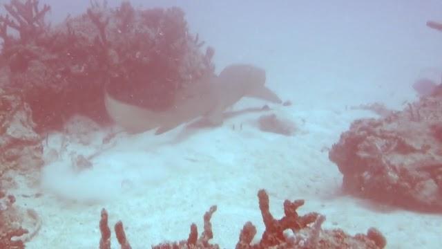 Miami Beach RPCV Divers 5-30-15