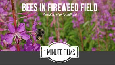 Bumblebee Video