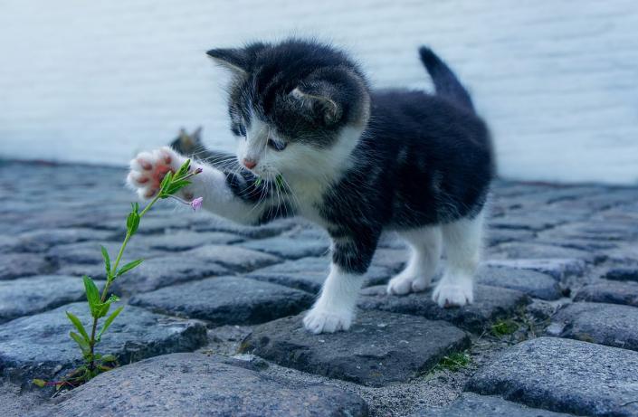 Kucing Suka Membawa Binatang Ke dalam Rumah. Ini Alasannya