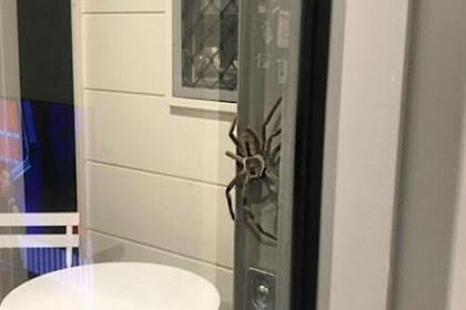 Ngeri, Rumah Ini 'Diteror' Laba-laba Raksasa