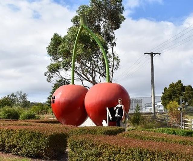 Latrobe | BIG Cherry at the Cherry Shed
