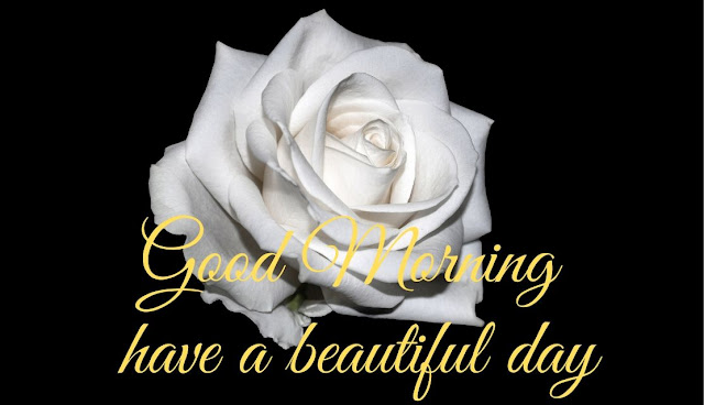 Good Morning have a beautiful day white rose Image