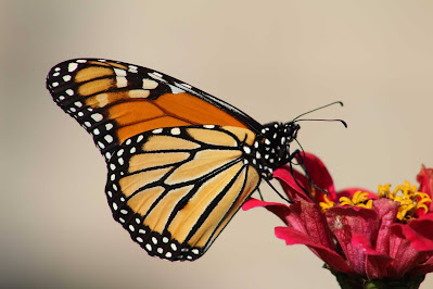 Macro Photography Tips for Photographers