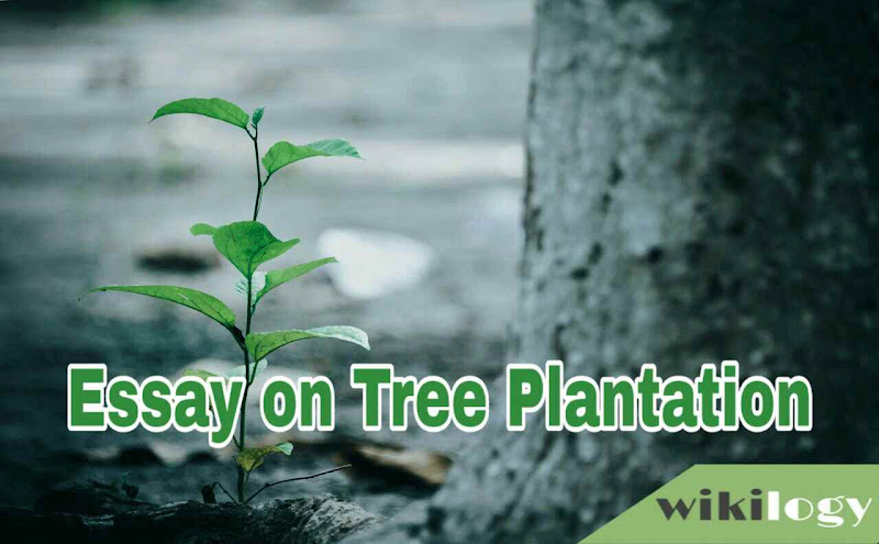 Tree Plantation Essay Composition