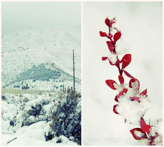 snow landscape, red branch: growcreative