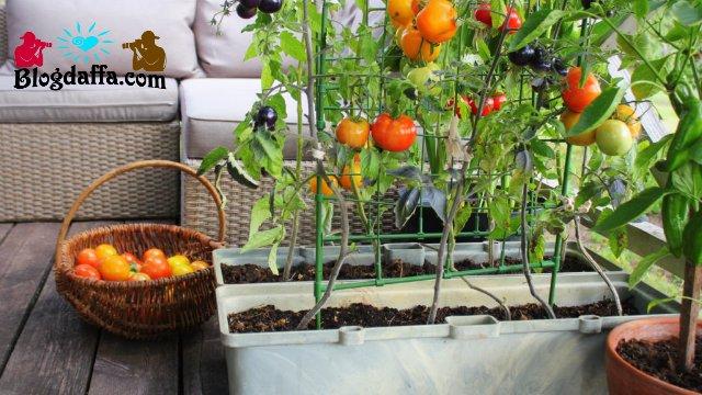 Taman Sederhana Sayuran Indoor