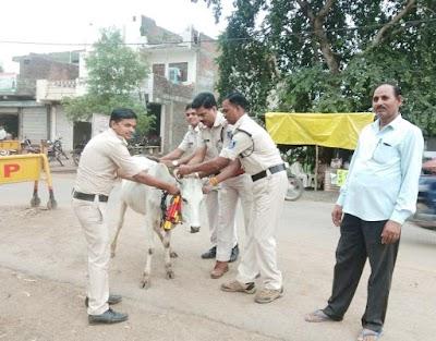 दुर्घटना से बचाने के लिए बदरवास पुलिस ने गायों के सींगों में लगाए रिफलेक्टर | Badarwas News