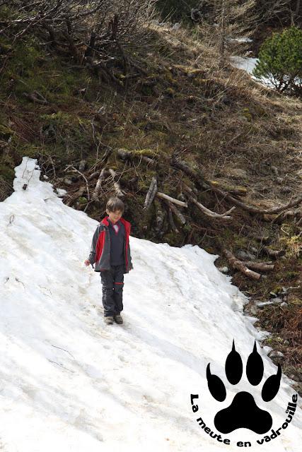 moyen-loup-neve-velika-planina-slovenie