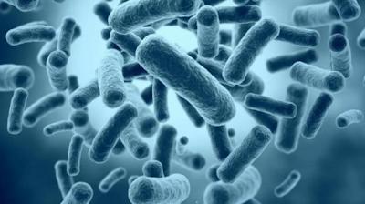 Seputar Bakteri E-Coli