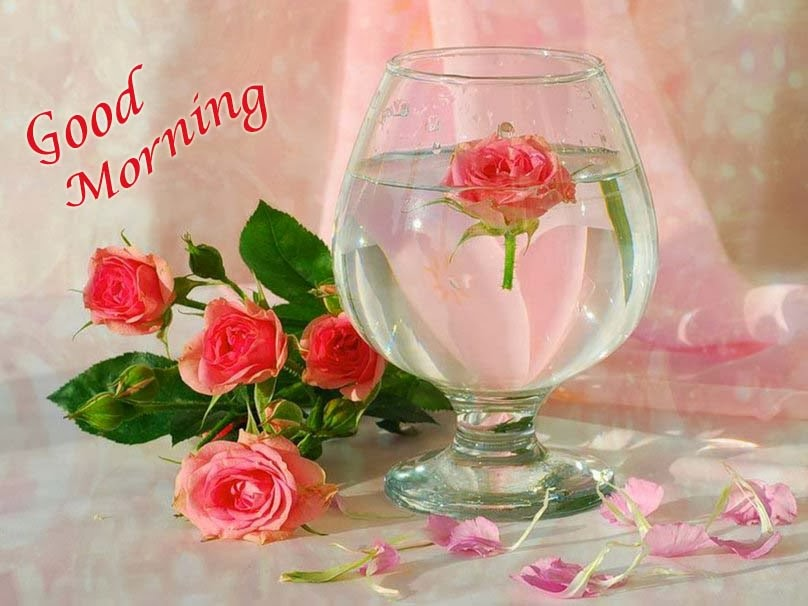 good-morning-pink-rose-hd-image