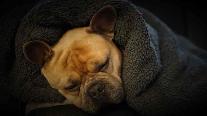 4 problemas e doenças que afetam os pets no frio