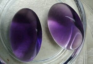 cara merawat kecubung ungu mudah
