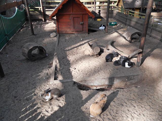 Nowy Tomyśl, zoo, zwierzęta, zwiedzanie