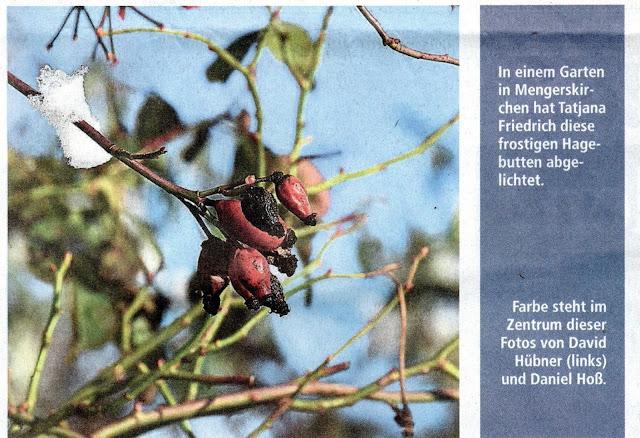 lesergalerie weilburger tageblatt