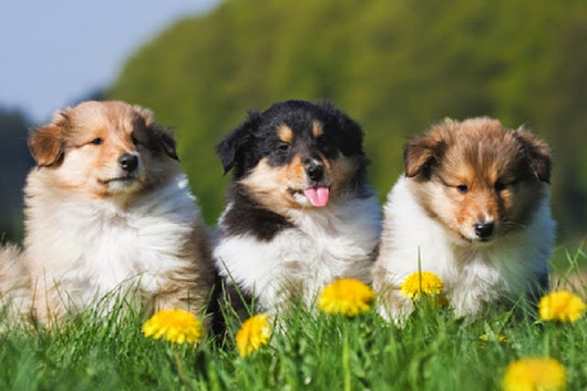 Spring Flowers Poisionous to Pets