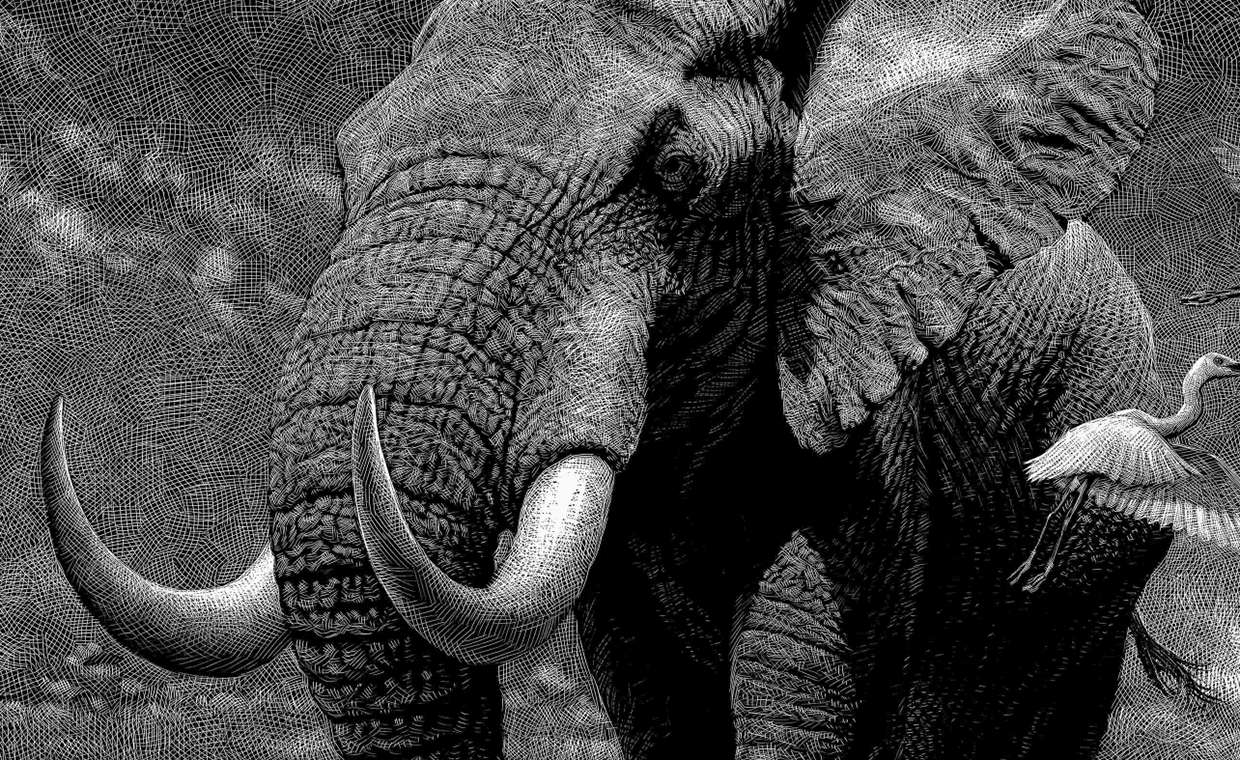 03-Elephant-Detail-Ricardo-Martinez-Wild-Animals-inside-Scratchboard-Drawings-www-designstack-co