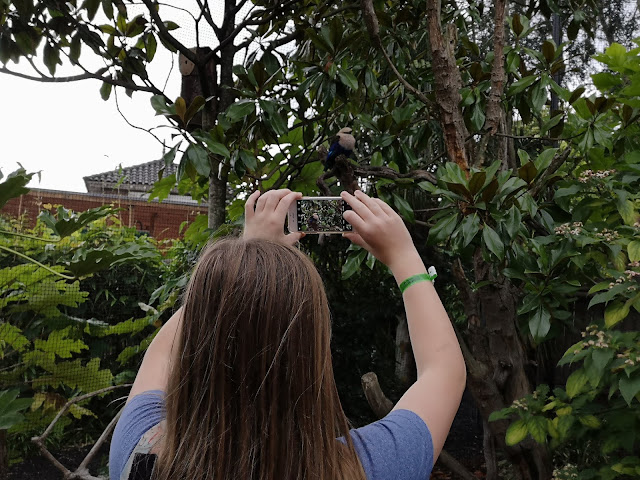 Tween taking a photo of a bird