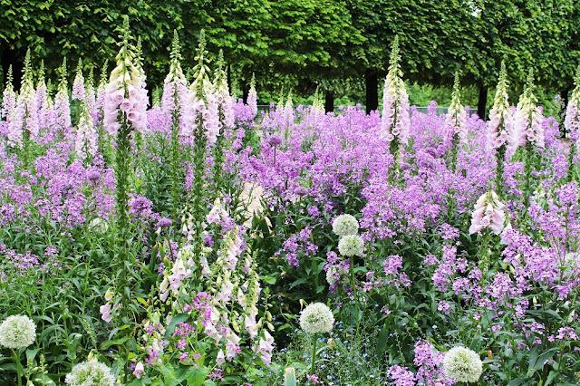 Digitalis purpurea in Jardin des Tuileries - Paris travel & lifestyle blog