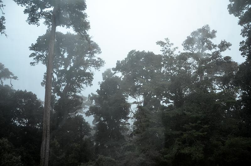 san-gerardo-de-dota-Costa-Rica-forest