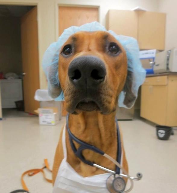 Sabe aquele bichinho de estimação que você tem em casa, seja ele, um passarinho, gato ou cachorro? É o veterinário o responsável por cuidar da saúde, bem estar, e higiene desses e de todos os outros animais.
