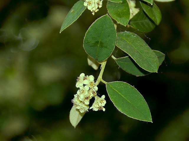 Flores Agrupadas