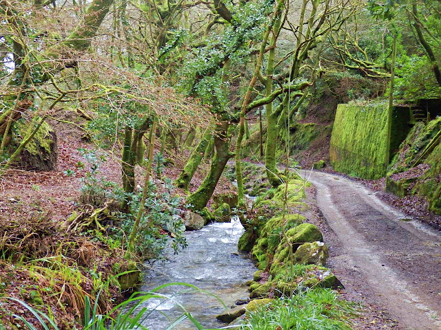 Stream in Gover Valley, St.Austell, Cornwall