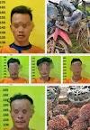 5 Pelaku Pencuri 100 Janjang Sawit Diamankan Polsek Rimba Melintang