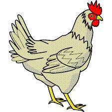 Hewan Ayam