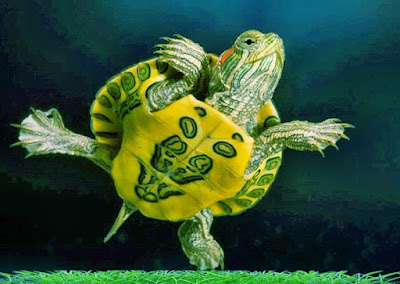 Yellow river turtles