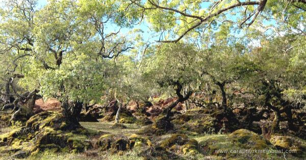 Hutan Bonsai