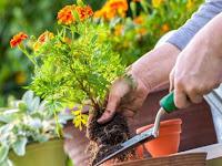 Terbaru! Inspirasi Berkebun dengan Hemat yang Dapat Anda Coba di Rumah
