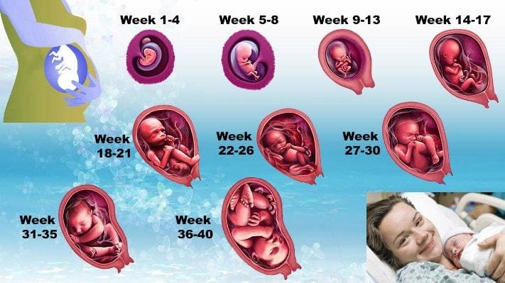 Gerakan Bayi Dalam Kandungan