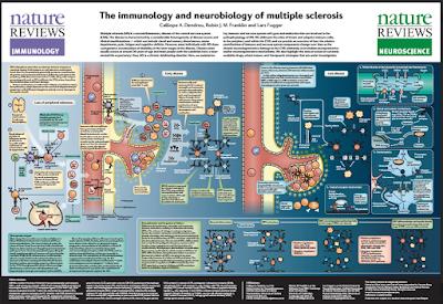 Immunoneurobiology Poster of Multiple Scelerosis