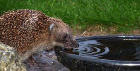 SOS acqua animali ricchi